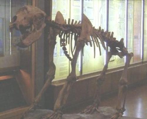 Museo civico paleontologico di Empoli