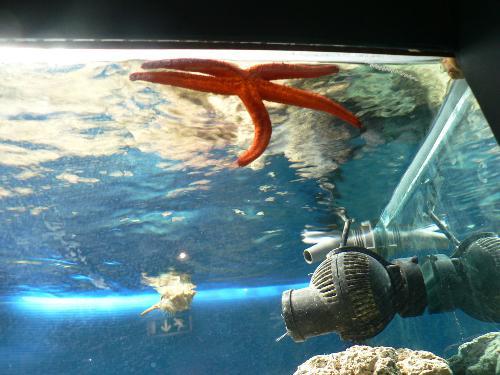 """Museo ittico """"A. Capriotti"""""""