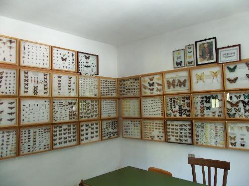 Associazione Amici del Museo di scienze naturali Belvi'