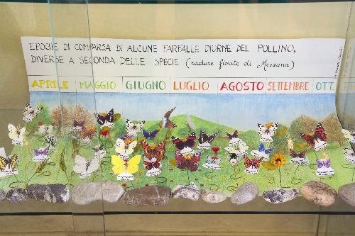 Museo Laboratorio della Fauna Minore del Parco Nazionale del Pollino