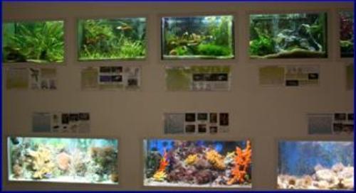 Museo di zoologia di Bari