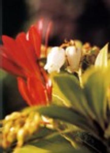 "Fondazione Andre'Heller - Giardino botanico ""A. Hruska"""