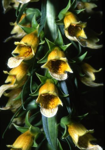 Orto botanico sperimentale G. E. Ghirardi