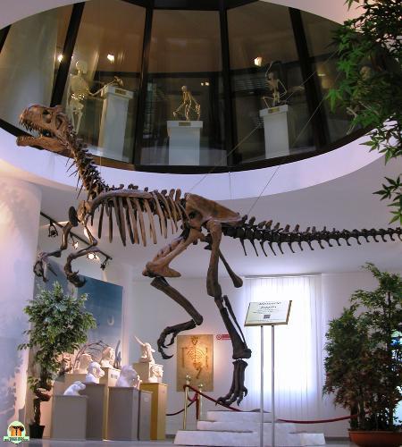 Museo universitario d'Abruzzo - Museo di storia delle scienze biomediche